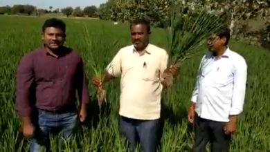 Photo of वारंगल का किसान हुआ इफको नैनो खाद के परिणाम से उत्साहित